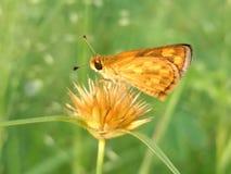 Красота бабочки леса и горы стоковое изображение