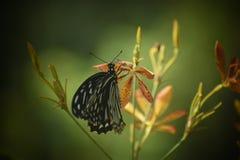 Красота бабочки стоковые фото