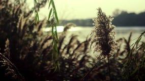 Красота берега реки Стоковое Изображение RF