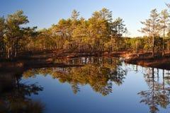 Красота болот Lahemaa стоковая фотография