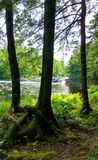 Красота водопадов через деревья Стоковые Изображения
