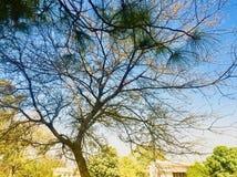 Красота дерева в сезоне осени Стоковая Фотография RF