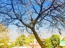 Красота дерева в сезоне осени Стоковая Фотография