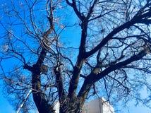 Красота дерева в сезоне осени Стоковое Изображение