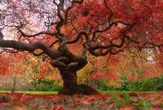 Красота деревьев Стоковые Фотографии RF
