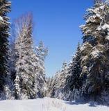 Красота леса зимы Стоковое Изображение