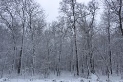 Красота зимы концепции hardwood С обнаженными деревьями покрытыми со снегом стоковое фото