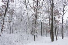 Красота зимы концепции hardwood С обнаженными деревьями покрытыми со снегом стоковое изображение