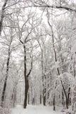 Красота зимы концепции hardwood С обнаженными деревьями покрытыми со снегом стоковая фотография