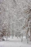Красота зимы концепции hardwood С обнаженными деревьями покрытыми со снегом стоковое фото rf