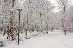 Красота зимы концепции hardwood С обнаженными деревьями покрытыми со снегом стоковые изображения