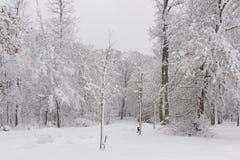 Красота зимы концепции hardwood С обнаженными деревьями покрытыми со снегом стоковая фотография rf