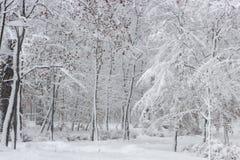 Красота зимы концепции hardwood С обнаженными деревьями покрытыми со снегом стоковые изображения rf