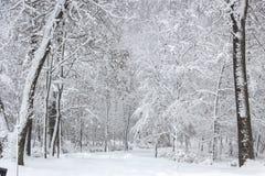 Красота зимы концепции hardwood С обнаженными деревьями покрытыми со снегом стоковое изображение rf