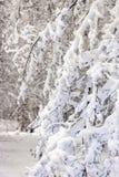 Красота зимы концепции hardwood С обнаженными деревьями покрытыми со снегом стоковые фотографии rf