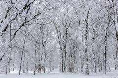 Красота зимы концепции hardwood С обнаженными деревьями покрытыми со снегом стоковые фото