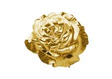 Красота золотое Роза иллюстрация вектора