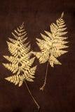 Красота лист папоротника Стоковое фото RF
