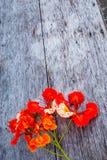 Красота красных цветка или pulcherrima l Caesalpinia Sw Стоковые Фото