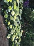 «Красота миллиона цветков» стоковая фотография