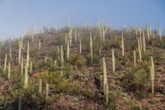 Красота национального парка Saguaro Стоковая Фотография RF