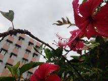 Красота никогда не умирает Стоковая Фотография RF