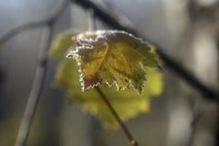 Красота осени заморозка на листьях стоковое изображение