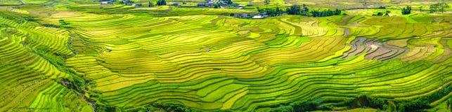 Красота панорамы террасных полей Tu Le, Yen Bai, Вьетнама Стоковое Фото