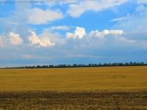 Красота поля, обширных пространств стоковая фотография