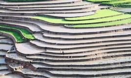Красота полей Стоковая Фотография RF