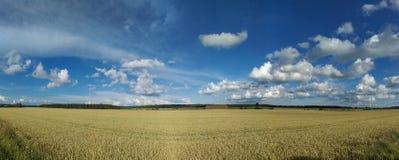Красота поля пшеницы Стоковое Фото