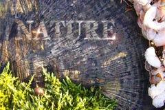 Красота природы на фоне отказов в старом дереве и ежегодных кольцах Стоковое Изображение RF