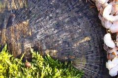 Красота природы на фоне отказов в старом дереве и ежегодных кольцах Стоковое фото RF