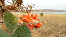 Красота природы они могут расплавить ваше сердце стоковые изображения rf