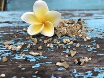Красота природы цветка Стоковые Фотографии RF
