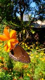 Красота природы Стоковое Изображение RF