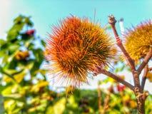 Красота природы Стоковая Фотография