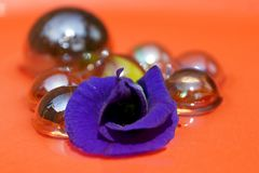 Красота пурпура Стоковое фото RF
