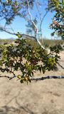 Красота пустыни Стоковая Фотография