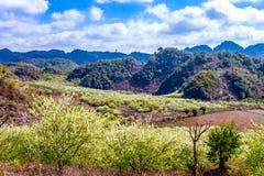 Красота плантации сливы Стоковая Фотография