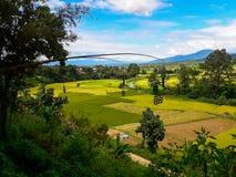 Красота района риса PUA Стоковые Изображения RF