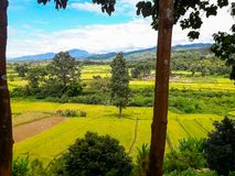 Красота района риса PUA стоковая фотография rf