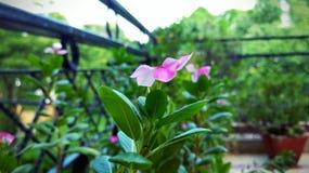 Красота сада влюбленности Стоковая Фотография RF