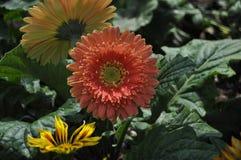 Красота свежих цветков конца крайности лист зеленого цвета природы вверх Стоковая Фотография RF