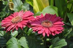 Красота свежих цветков конца крайности лист зеленого цвета природы вверх Стоковое Изображение