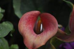 Красота свежих цветков конца крайности лист зеленого цвета природы вверх Стоковые Изображения RF