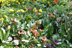 Красота свежих цветков конца крайности лист зеленого цвета природы вверх Стоковое фото RF