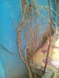 Красота сухих ветвей стоковые изображения