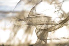 Красота сломленных сетей Стоковые Фотографии RF