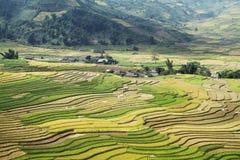 Красота террасных полей Стоковая Фотография RF